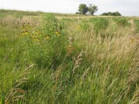 ARS scientists found antibiotic-resistant bacteria occurring naturally in undisturbed Nebraska prairie soils. Photo by ARS.