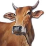No Beef in Vedas – 2