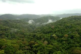 Panama Rainforest Chagres 1