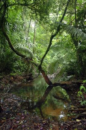 Panama Rainforest Stream Bed
