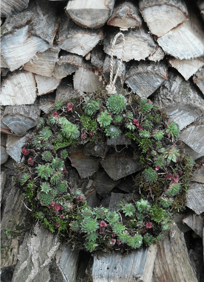 Wreath made from succulents plants displayed on some wooden logs