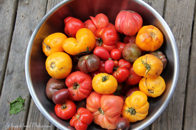 heirloom tomatoes in the Pacific Northwest!