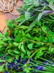 herb-drying
