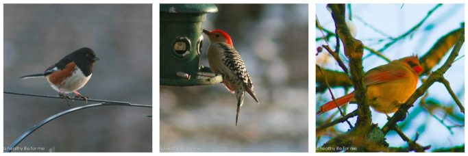 Caring for the Backyard Birds | ahealthylifeforme.com