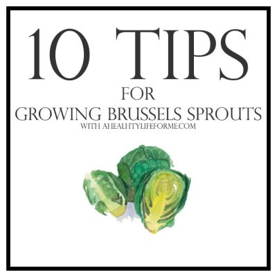 10 Tips for Growing Brussels Sprouts