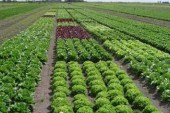 Activan  Comité Agropecuario de Emergencia por el paso del huracán Matthew