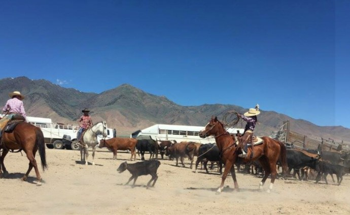 Ashley Weaver a horseman's wife girls roping and their ranch horses a girl and her horse