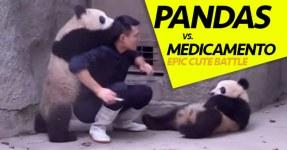 Pandas NÃO GOSTAM de Tomar Medicamentos