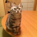 話題の「障子を突き破ったネコ 」可愛すぎ即死。
