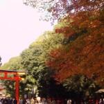 京都の紅葉は「下鴨神社〜糺ノ森」へ。