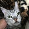 ついに自分が載ったananを目にした猫「ほたて」
