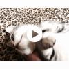 猫の「ゴロゴロ」の効果と初公開なほたてのゴロゴロ音。