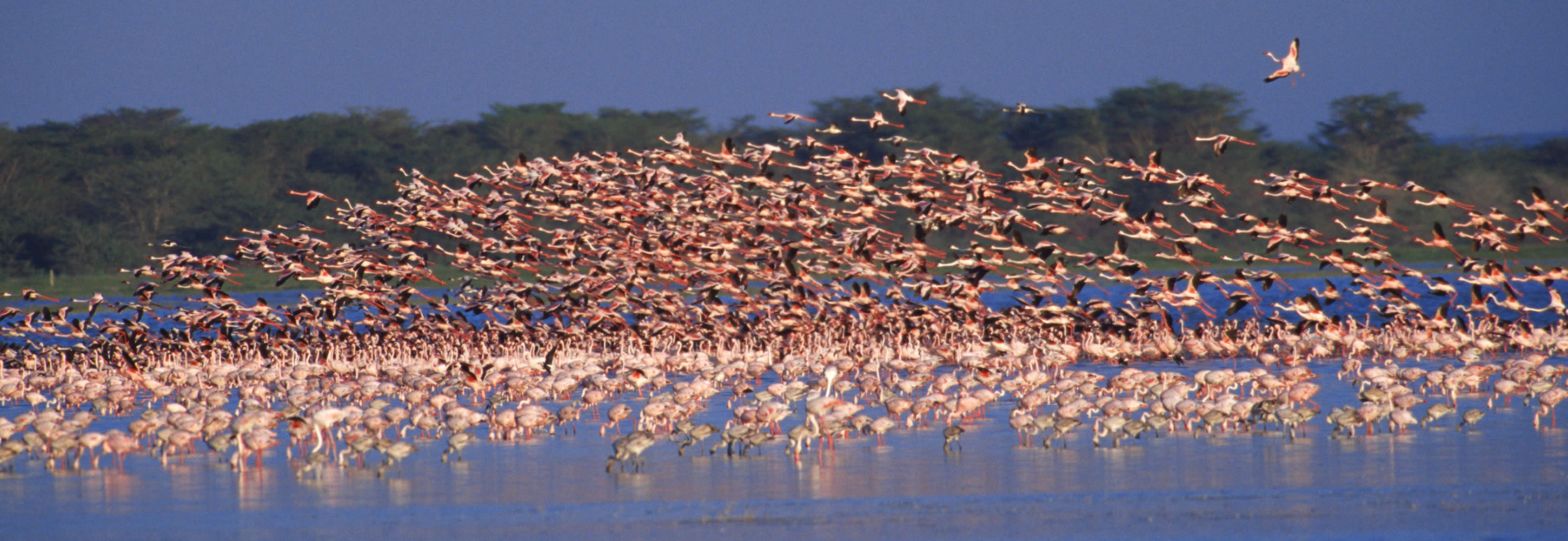 004-flamingoes-lake-nakuru