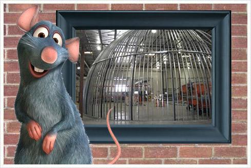 Ratatouille Element Trockenbaufirma bestätigt Ratatouille Ride!