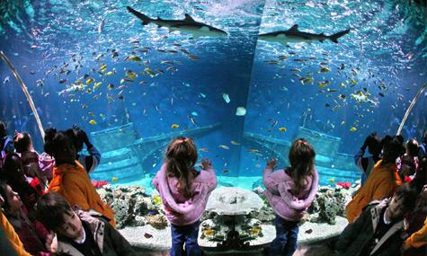 Sea Life Aquarium I Drive Live – Orlando erliegt dem Zauber Merlins. Oder doch nicht?