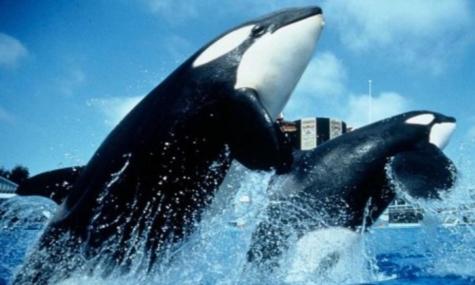 SeaWorldOrlando1 Verkehrte Welt?   PETA kauft Aktien der SeaWorld Parks Gruppe