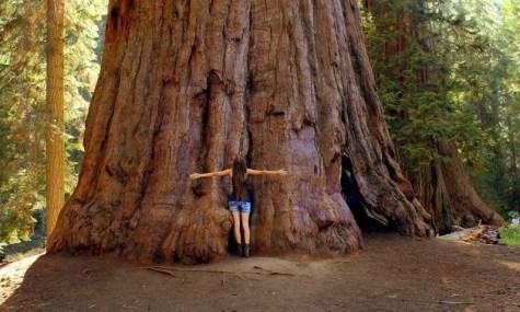 NP Sequoia 5 475x285 Große Bäume und königliche Täler   Sequoia & Kings Canyon National Park