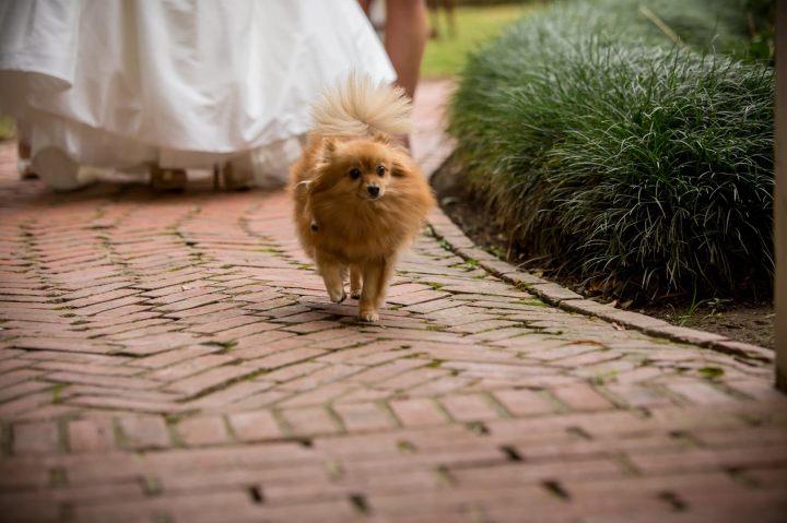 Ceremony with pet