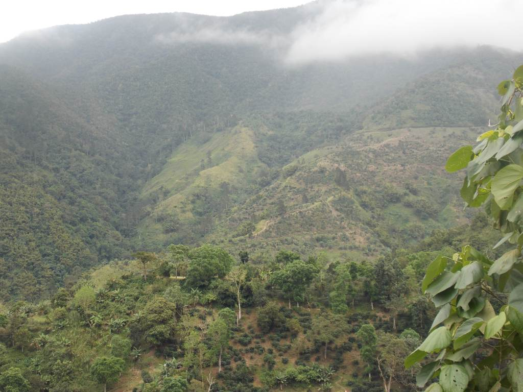 The Blue and John Crow Mountains cloud forest.