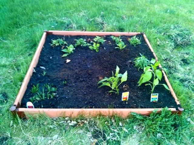 Garden Bed #2