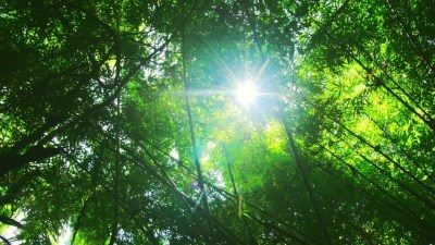 Sun Rays Light Shines Through Trees And Branches Of Jungle ...