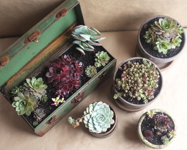 succulent toolbox diy