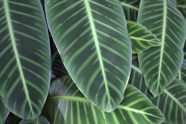Pretty Plant Leaves