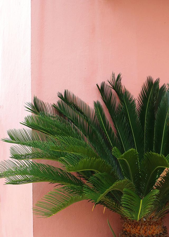 Plants on Pink 2