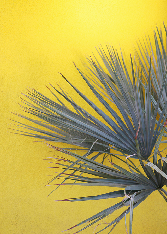 Plants on Yellow