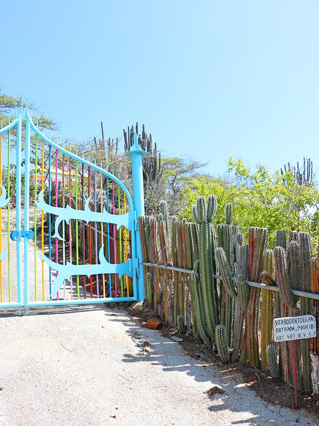 cactus-fence-640