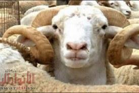 """ما حكم إعطاء جزء من الأضحية لـ""""الجار"""" الغير مسلم؟.. لجنة الفتاوي ترد"""