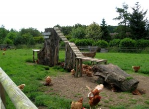 """Goat Mountain"" Chicken Run for Maximum Poultry Pleasure"