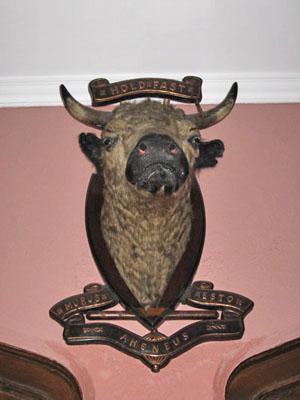 9 Dunvegan Bull400s