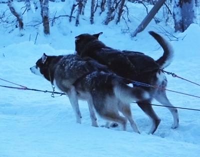 Lapland Blog A 19 400