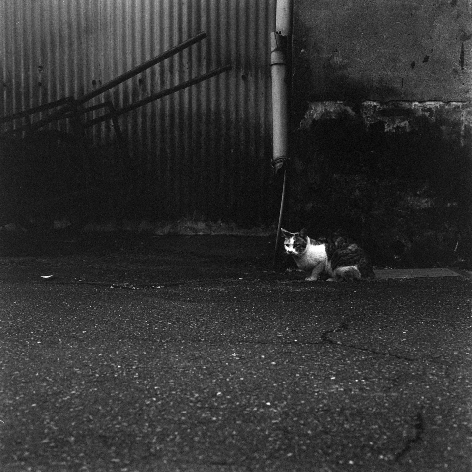 Kodak Tri-X 400 shot at EI25600