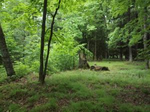 Deer on the rt, no deer on left
