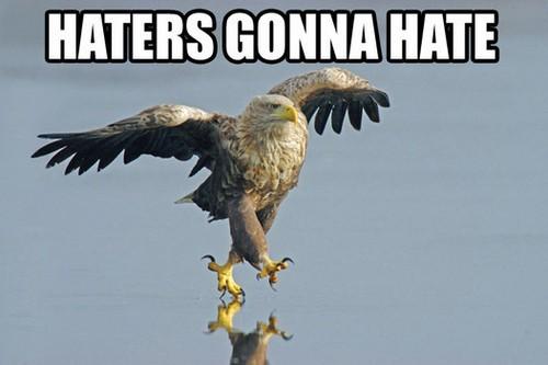 Hate Eagle!