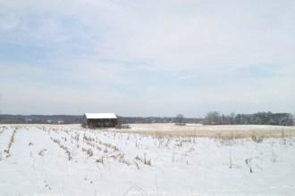 Barn in snowy cornfield