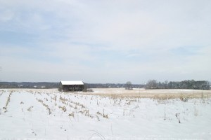 Barn in snowy cornfield