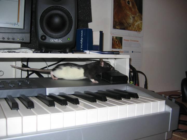Donn's new pet rat