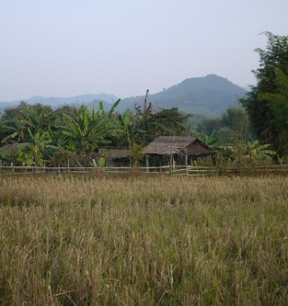 Rice Paddy in Hongsa, Laos