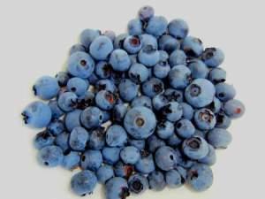 Blueberry Allergy