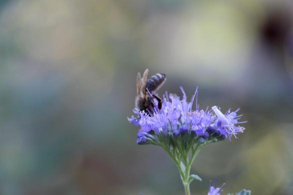 Auch die Bienen freuen sich über die warmen Tage.
