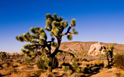 Joshua Tree National Park HD Wallpapers - All HD Wallpapers