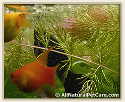 Easy, Low Light Aquarium Plants Even I Can't Kill | All Natural Pet