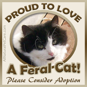 Animal Shelter - Feral Cats