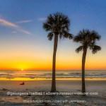 palm tree sunrise square with signature