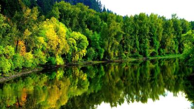 4K Wallpapers with Jungle and River Pictures Free - HD Wallpapers   Wallpapers Download   High ...