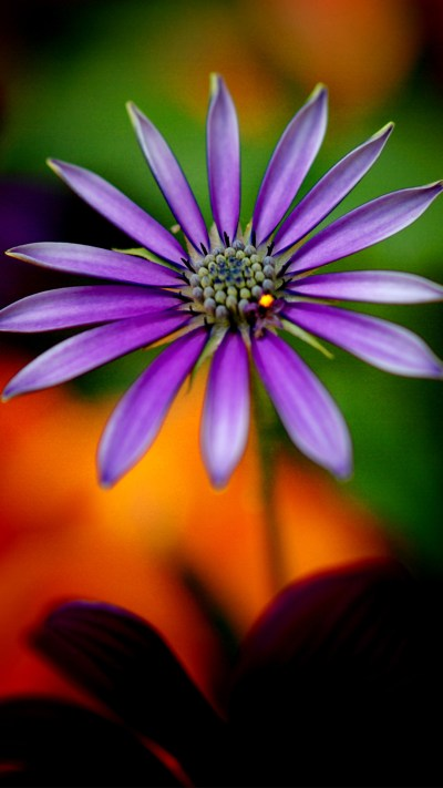 Full HD Wallpapers 1080p for Mobile with Purple Flower - HD Wallpapers | Wallpapers Download ...