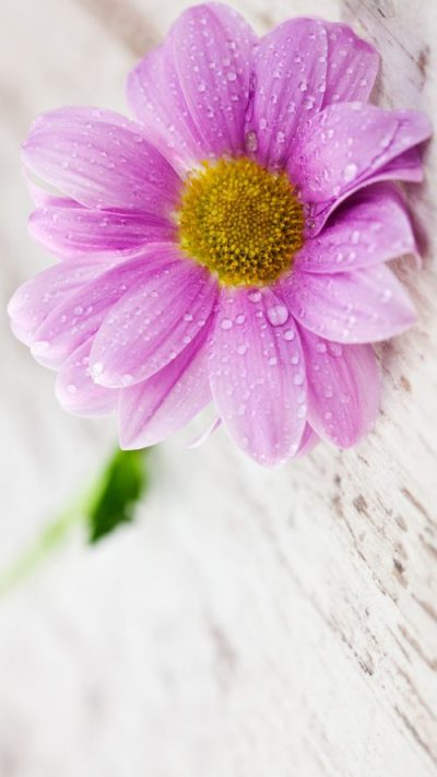 Flower Wallpapers for Mobile Phones with 1440x2560 and 5 inch Screen Size - HD Wallpapers ...